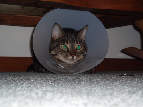 Annie with Lampshade, unhappy