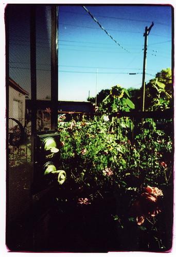 door to garden new mexico