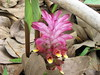 deep pink wild jungle flower
