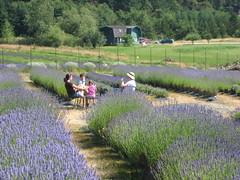 Pelindaba Lavender Farm