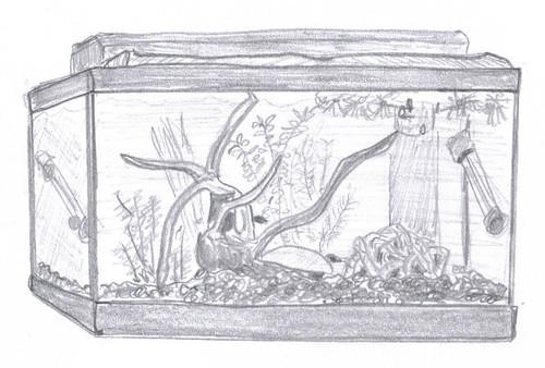 Fish tank - sketch, 18 June 2007
