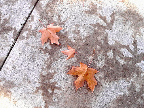 Fallen leaves and leaf-prints