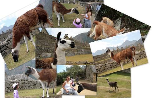 081410_Machu Picchu