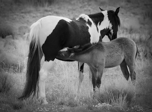 NM Wild Horses (54) nwm