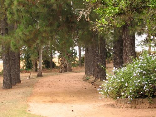Horto Florestal, por Claudio