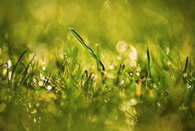 Wet Grass...