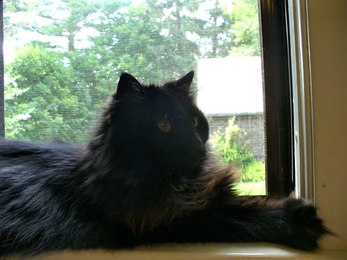 Rocco on window sill