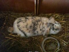 Dieses Kaninchen sucht noch einen Namen ;)
