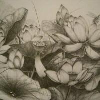 素描_荷花(Lotus)