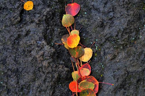 Autumn Color 002