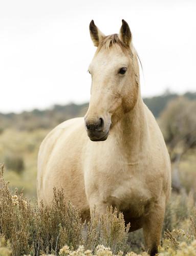 NM Wild Horses (63) nwm