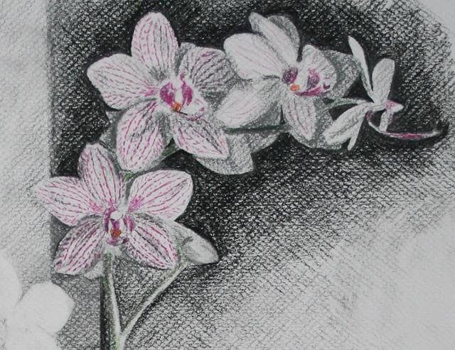 Orchids (detail)