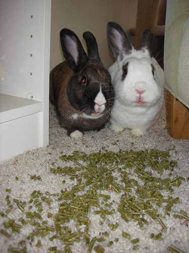 Why do you think we knocked over the treat jar?