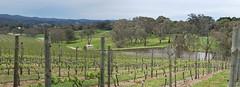 Nepenthe winery vineyard