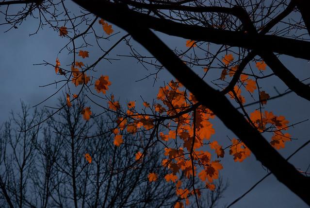 Dusk Leaves