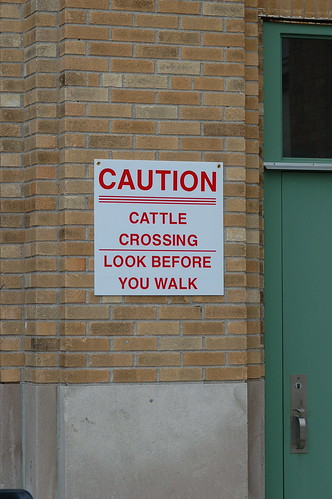 Watch out for cattle!