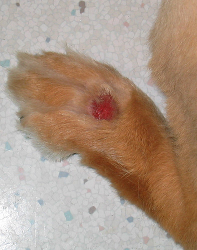 If You Don't Know What A Lick Granuloma Is, Count Your Blessings!