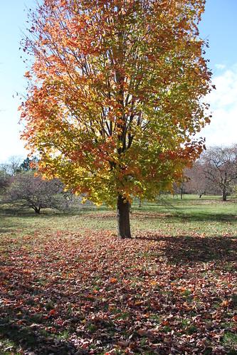 UW Arboretum - Spotted Tree