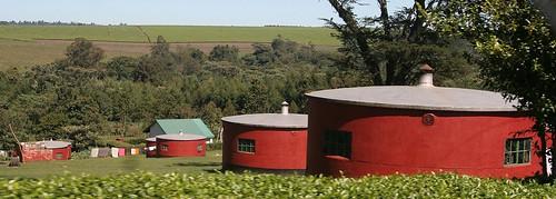 Tea Plantation Housing