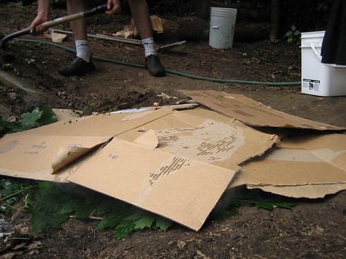 Cardboard Layer