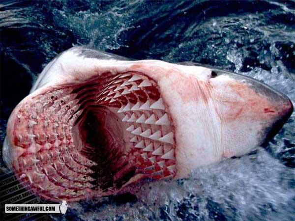shark_addsomesthing
