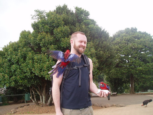 Getting friendly with the local birds in the Lamington National Park