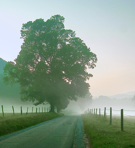 Dawn in Cades Cove
