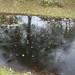 Oskärpa i dammen