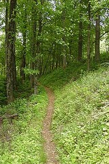 Appalachian Trail in Virginia