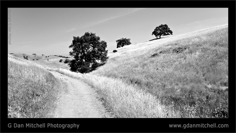 Three Trees and Trail, Calero Hills
