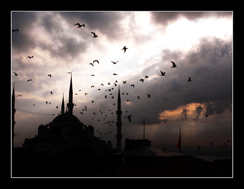 Morning flight (Blue Moschee, Istanbul) by Il C o n t e.