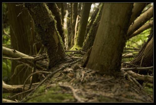 forêt, bosque