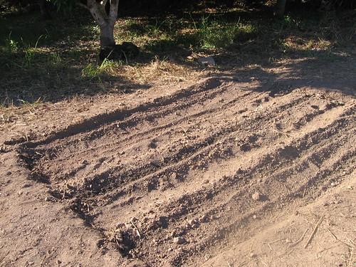 Freshly dug garden plot