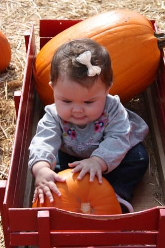 grab that pumpkin