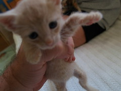 Little fat belly kitten baby