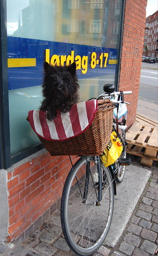 awwww, I snapped a photo of this dog waiting patiently outside of my local netto which is a grocery store