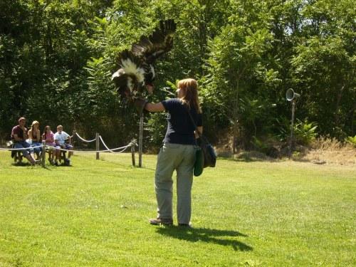Exhibición de aves rapaces