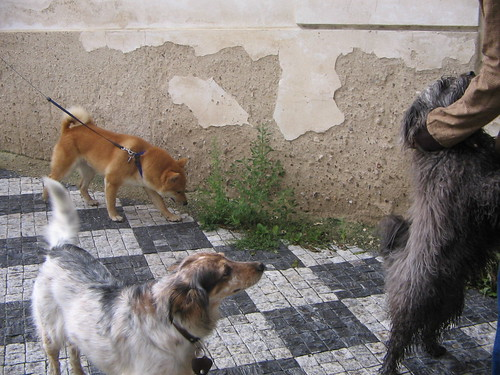 Dogs of Praha I