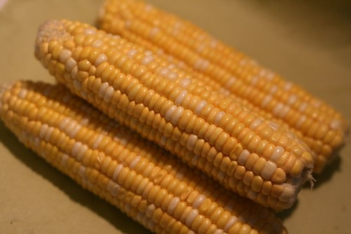 Golden Ears of Sweet Corn