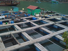 Fish Farm from atop the Junk