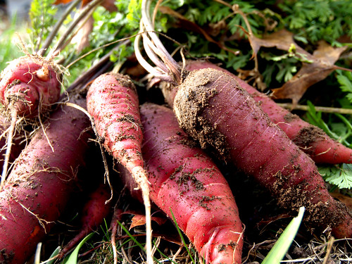 purple dragon carrots