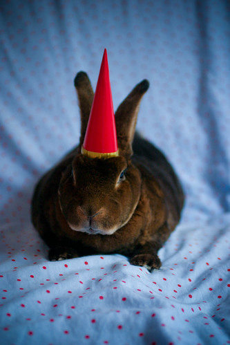 birthday bunny 2