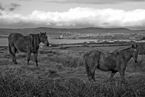 West Cork Horses