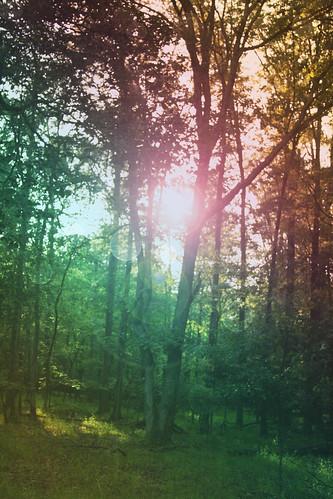 365-170 Sun in theTrees