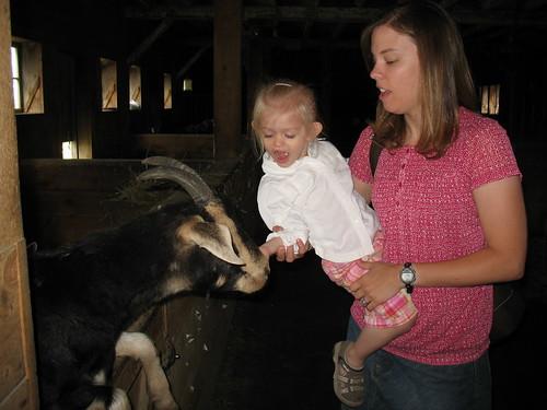 Bub feeding the goat