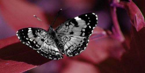 Butterfly-Glow.jpg