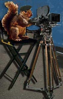 squirrel director