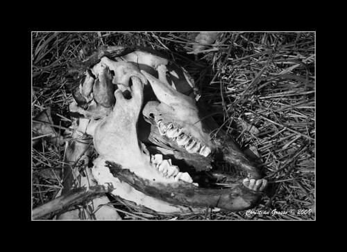 "Muerte en el Campo • <a style=""font-size:0.8em;"" href=""http://www.flickr.com/photos/20681585@N05/3425765588/"" target=""_blank"">View on Flickr</a>"