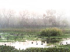 Morning at 40 Acre Lake