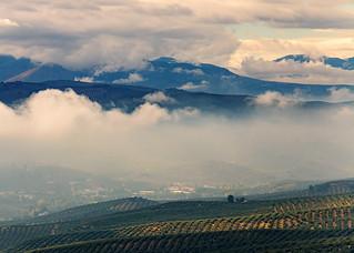 Nubes bajas en campos de olivares
